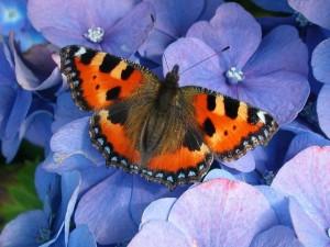 butterfly-1503149-640x480