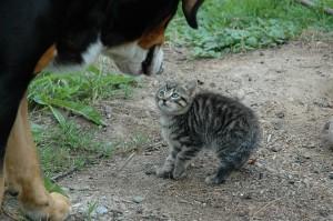 cat-245750_640