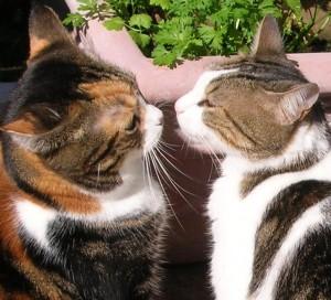 valentine cats3